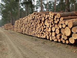 Helms Tekampe International – log purchase (we buy)