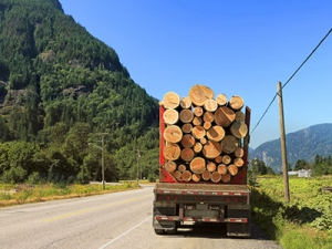 Photo of wood transportation